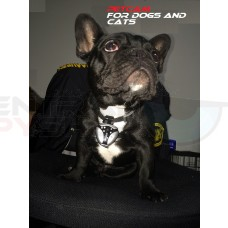 Pet Spy Camera - for cat's and dogs w/ nightshot with Audio - Petcam - Catcam